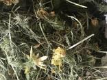 Лекарсвенные растения (сырье) - фото 7