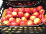Sweet and juicy Peach, Nectarine and Cherry time. - photo 3